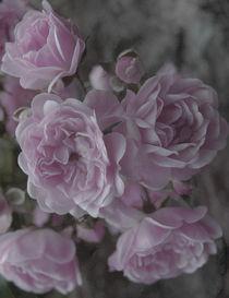 Delicate rose von Lina Shidlovskaya
