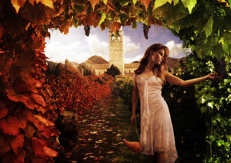 The-masters-vineyard-copy-5