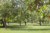 Plummboom,s Garden by Michael Beilicke