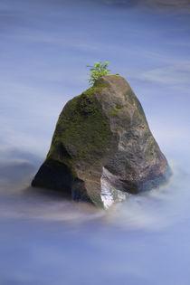 miniature island von Gregory Basco