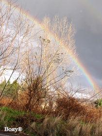 Rainbow by Roberta Denicolo