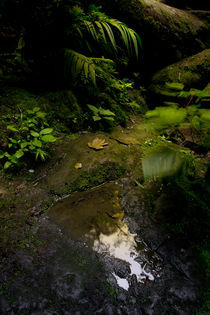 cloud forest by Gregory Basco