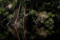 jungle von Gregory Basco