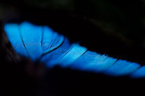 butterfly wing abstract von Gregory Basco