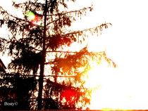 Big Tree von Roberta Denicolo