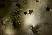 Backwater stream in rainforest von Gregory Basco