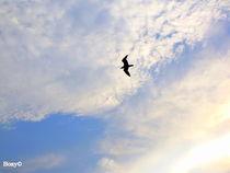 Seagull by Roberta Denicolo