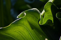 Green Ruffles von Helen K. Passey