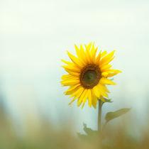 Sonne im Herzen by Ive Völker