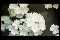 White flowers film negative von Ondrej Vasak