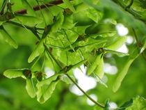 green VIII by vanderson