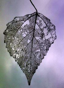 Blatt im Wind, Herbst. zielisiertes Blatt von Simone Cuambe