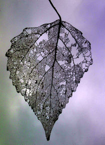 Blatt im Wind, Herbst. zielisiertes Blatt by Simone Cuambe