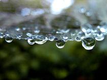 'Wassertropfen im Netz' by Simone Cuambe