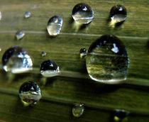 Wassertropfen, Wasserperlen by Simone Cuambe