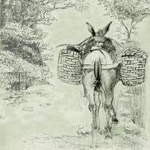 Mula de tropeiro von Vinicius Chagas