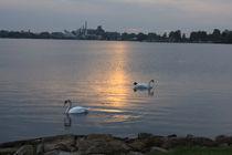 Schwanensee by michas-pix
