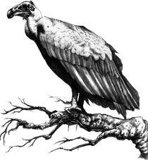 Dead-vulture-adj-bg