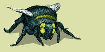 02-comp-bumblebee