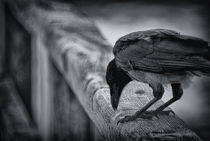 the raven nevermore by ullrichg