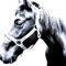 El-caballo-amistoso-hi