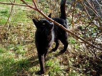 black cat by Mirela Oprea