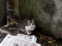 newspaper cat by Mirela Oprea
