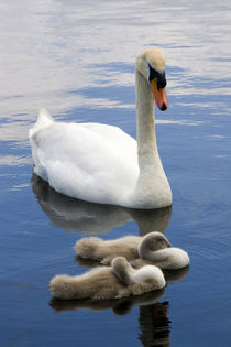 Mother Swan by George Kay