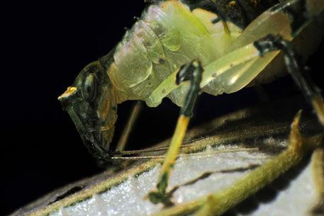 Insektaf-12-09-11