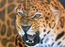 Endangered Leopard by 4endangered