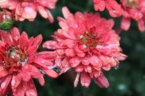 Pink Rain von Carrie Penrod