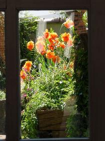 Das Fenster zur Natur von Emanuel Lonz