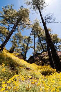 Primavera en las Cañadas, Tenerife, Teneriffa von Raico Rosenberg