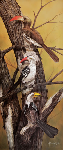 Various Hornbills by Andre Olwage