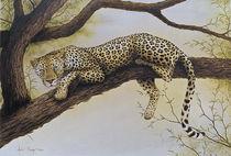 Leopard in Tree von Andre Olwage
