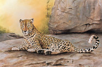 Leopard on rock von Andre Olwage