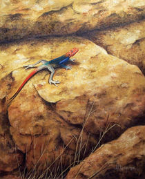 Agama lizard by Andre Olwage