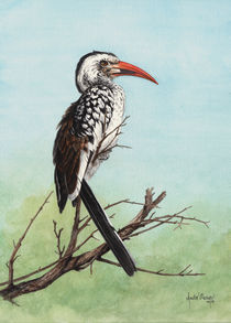 Red Billed Hornbill by Andre Olwage