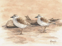 Sand Plovers by Andre Olwage