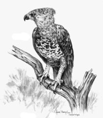 Crowned-eagel