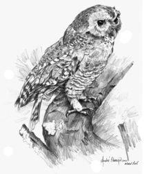 Wood Owl von Andre Olwage