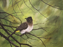 Dark Capped Bulbul by Andre Olwage