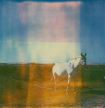 'the wanderer' by Jennifer Evans