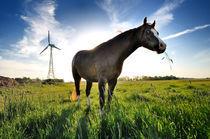 Pferd auf Hof Butenland von Thomas Schaefer