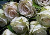 White Roses by Robert  Perks
