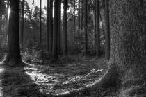 Mossy woods by Jan Walter Schliep