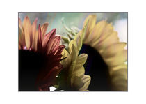 sunflowers by Robert  Perks