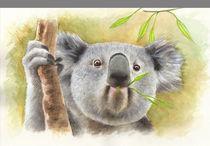 koala by Damaride Marangelli