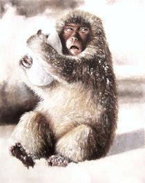 Macaco by Damaride Marangelli