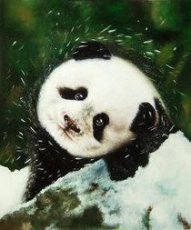 Panda by Damaride Marangelli